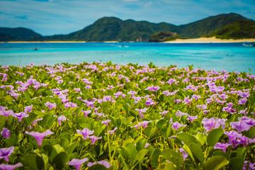 Fotobehang Toscane Beach morning glory at Zamami Island, Okinawa, Japan