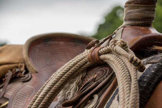 Saddle and Lasso