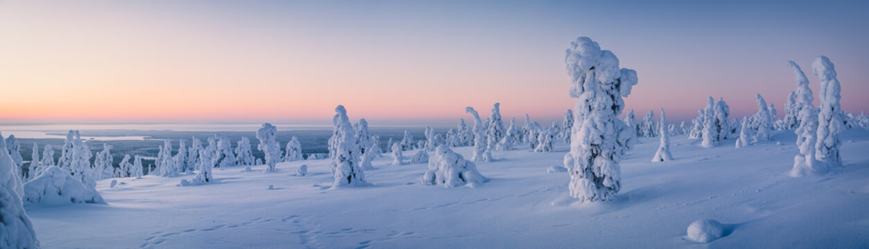 Very wide panorama of snow packed trees on Riisitunturi fell in Riisitunturi National Park, Posio, Finland