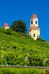 Castle Stainz and vineyard, Styria, Austria