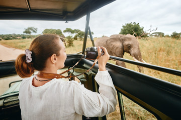 A woman on an African safari travels by car with an open roof and photograph wild elephants