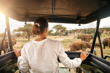 Woman tourist on safari in Africa, traveling by car with an open roof in Kenya and Tanzania, watching elephants in the savannah