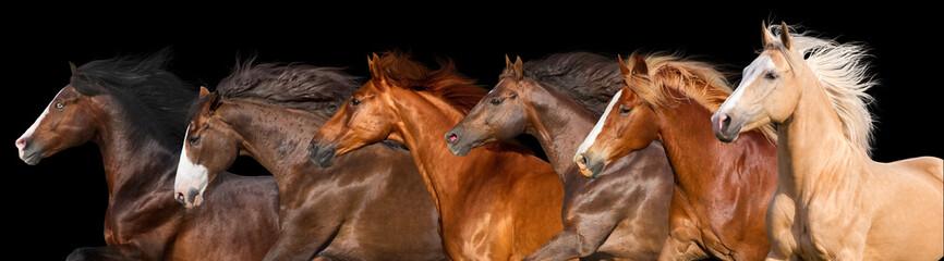 Horse herd run isolated on black background Fotoväggar