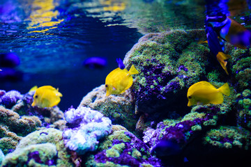 Wonderful and beautiful underwater world with corals and tropical fish. Wall mural