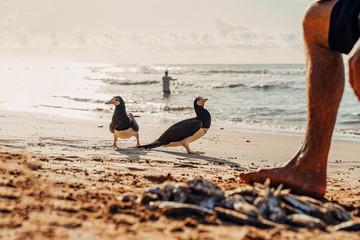 Imagens do Paraíso de Fernando de Noronha - Pernambuco - Brasil.