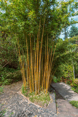 bamboo plants in park