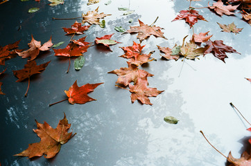 Autumn leaves on car hood