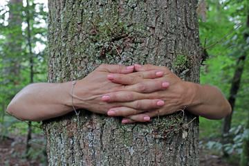 Frauenhand umarmt Baumstamm