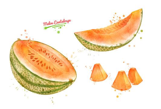 Illustration of sliced Melon Cantaloupe