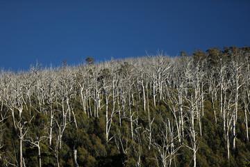 In de dag Fantasie Landschap Regenwald in Australien