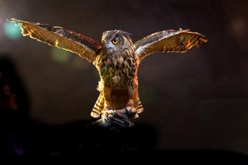 Birds of Prey - Eurasian Eagle Owl Wall mural