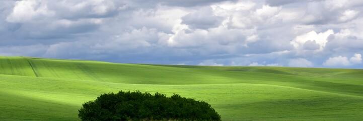 Green Rolling Hills In June