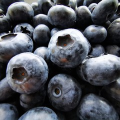 Blueberries without leaves close-up Photo
