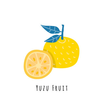 Yuzu fruit flat vector illustration
