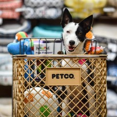 Happy dog sitting in a Petco shopping cart