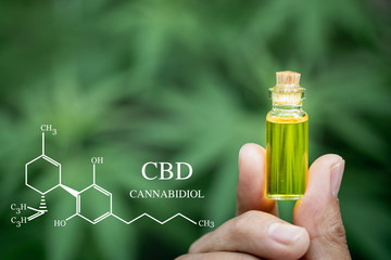 close up of Hemp oil in human hands, CBD formula.  cannabinoids and health, medical marijuana, CBD...