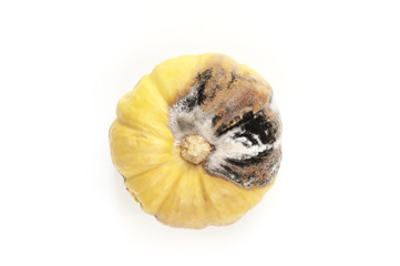 Rotten and moldy pumpkin