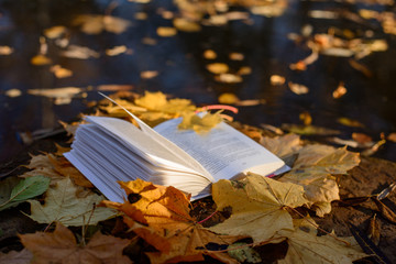 open book and autumn Wall mural