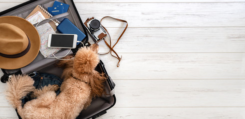 The dog lies in a suitcase. Suitcase with things and travel accessories.