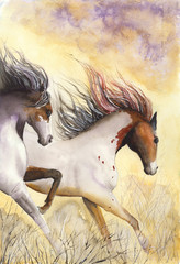 Watercolor picture of two running horses with clouds of dust and dry shrubs on the ground