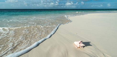 Shell on the beach, Anguilla island
