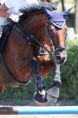 Foto op Plexiglas Show jumper horse and rider performing jump at show jumping training. Selective focus