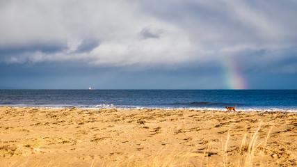 Dog on Dornoch beach with a ship and a rainbow on the horizon
