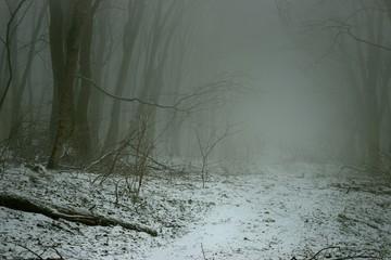 Keuken foto achterwand Bos in mist Foggy forest