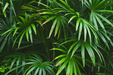 Wall Mural - Green tropical leaves, natural background