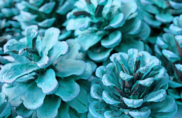 Pop Art Styled Heap of Dry Pine Cones in Turquoise Blue Color