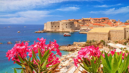 Coastal summer landscape - view of the blooming oleander and the Old Town of Dubrovnik with city beach on the Adriatic coast of Croatia