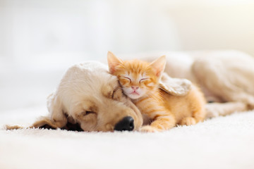 Spoed Fotobehang Kat Cat and dog sleeping. Puppy and kitten sleep.