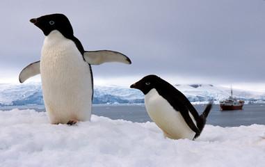 Acrylic Prints Antarctica Pair Adelie penguins Antarctica