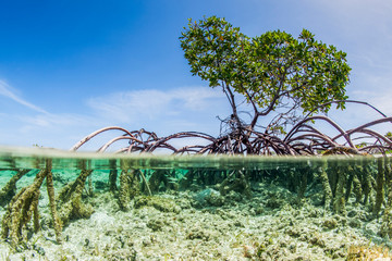 Over and under water photograph of a mangrove tree in clear tropical waters with blue sky in background near Staniel Cay, Exuma, Bahamas