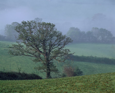 England, Totnes. Morning mist covers the fields in Totnes, Devon, which is one of the oldest boroughs in England.