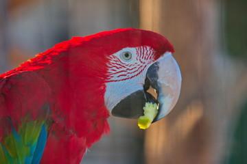 Fond de hotte en verre imprimé Perroquets Parrot