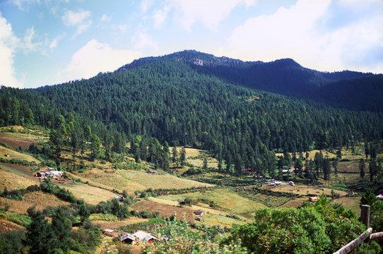 North America, Mexico, Michoacan. These are the hills near Angangueo where Monarch Butterflies (Danaus plexippus) winter.