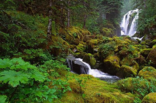 North America, USA, Alaska. A waterfall and rain forest in Southeast Alaska.