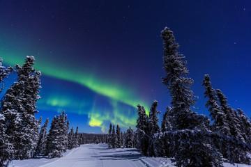 Foto op Plexiglas Noorderlicht Aurora borealis, Northern Lights near Fairbanks, Alaska