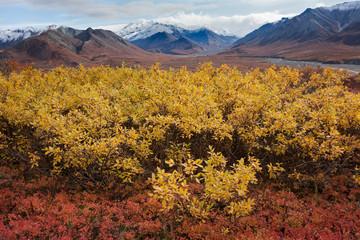 USA, Alaska, Fall Foliage