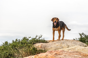 Dog stands on a stone cliff