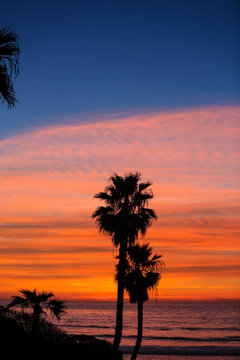 Solana Beach, San Diego County, California. Palm trees face the ocean during a pink, orange cloud sunset with blue sky
