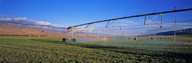 Fototapete - USA, California, Owens Valley. Extensive irrigation keeps California's Owens Valley green.