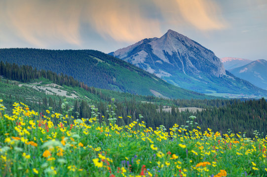 USA, Colorado, Crested Butte. Landscape of Mt Crested Butte and wildflowers.
