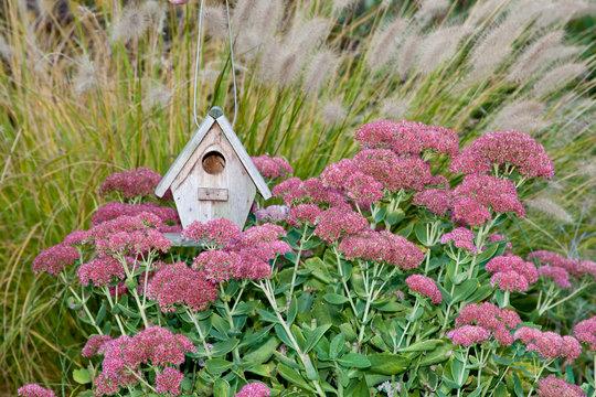 Birdhouse in garden with Autumn Joy Stonecrop (Sedum spectabile 'Autumn Joy') and Fountain Grass (Pennisetum setaceum) Marion County, Illinois