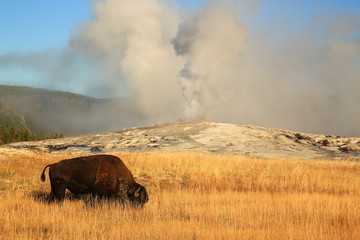 Fotorolgordijn Bison USA, Yellowstone National Park, Montana, Old Faithful and bison
