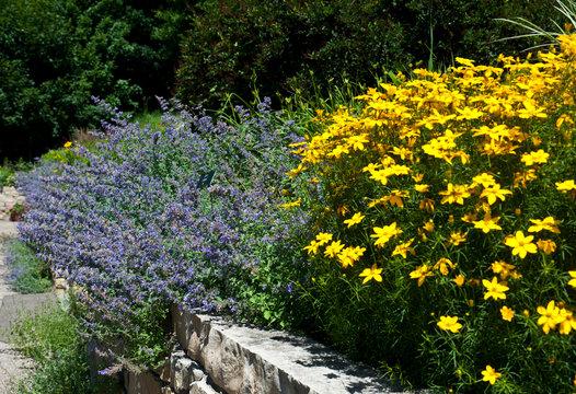 USA, Minnesota, Chaska, Minnesota Landscape Arboretum, Sensory Garden, Rudebeckia Goldstrum