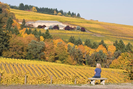 USA, Oregon, Willamette River Valley. Woman gazes at scenery of Archery Summit Winery. (MR)
