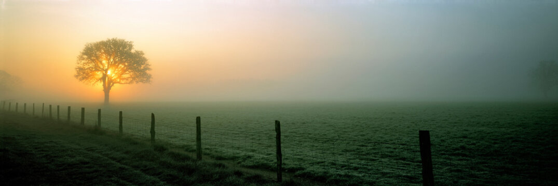 USA, Oregon, Corvallis. The sun breaks through the mist silhouetting a tree near Corvallis, Oregon.