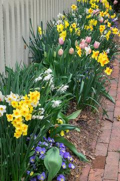 USA, Virginia, Williamsburg, spring border garden